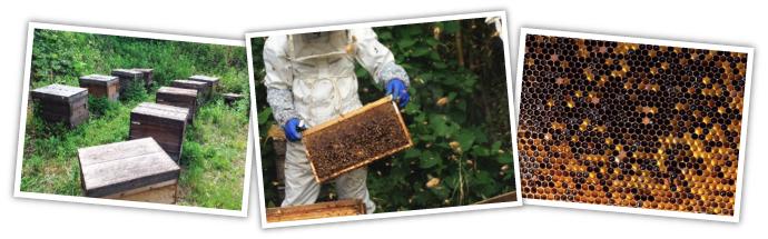 ミツバチと生命館